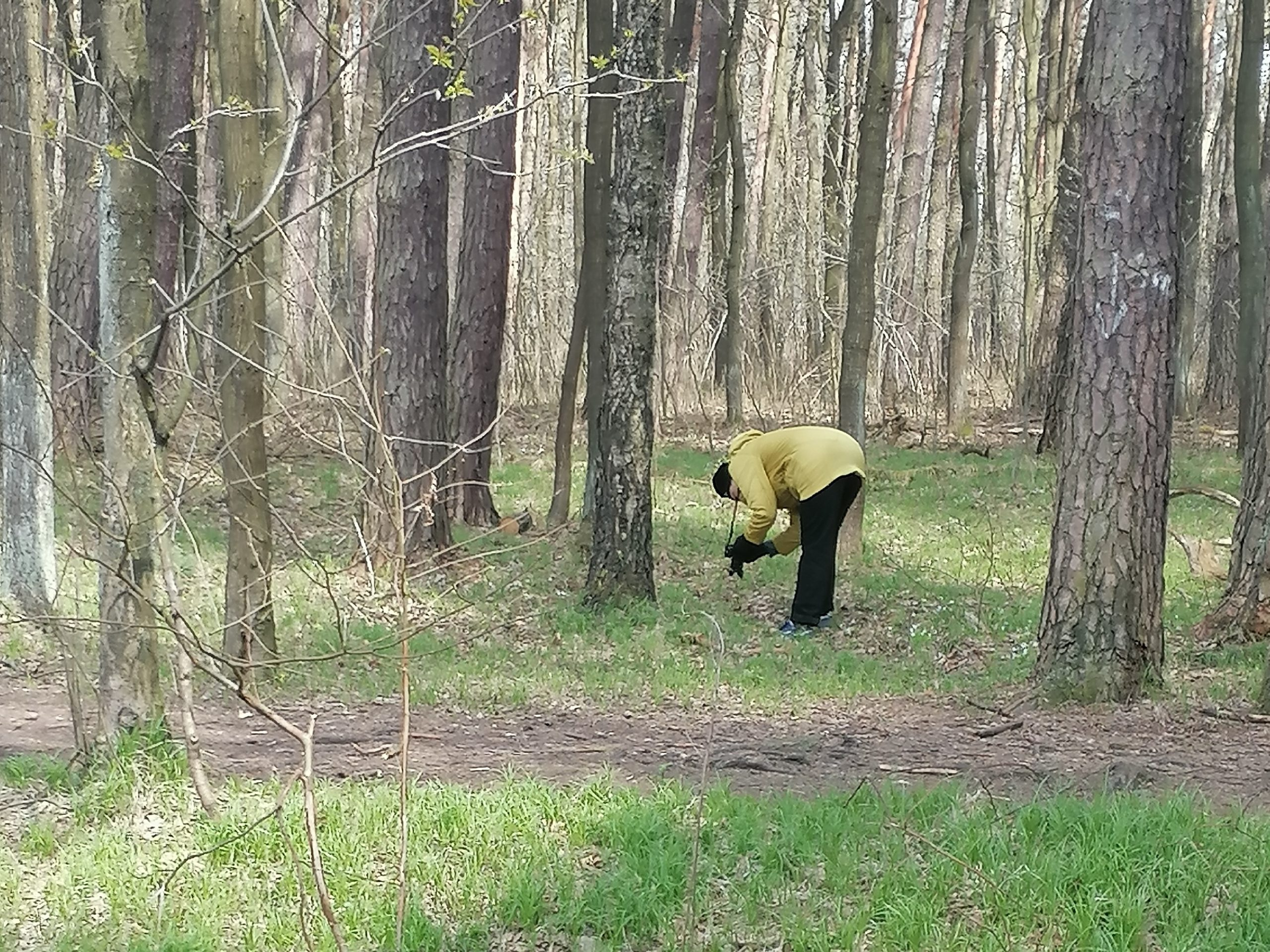 Plenerowe warsztaty fotograficzne Klub Seniora Platyna - zdjęcie pokazuje las i uczestników fotografujących na leśnej polanie.